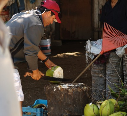 Coconut Fresca